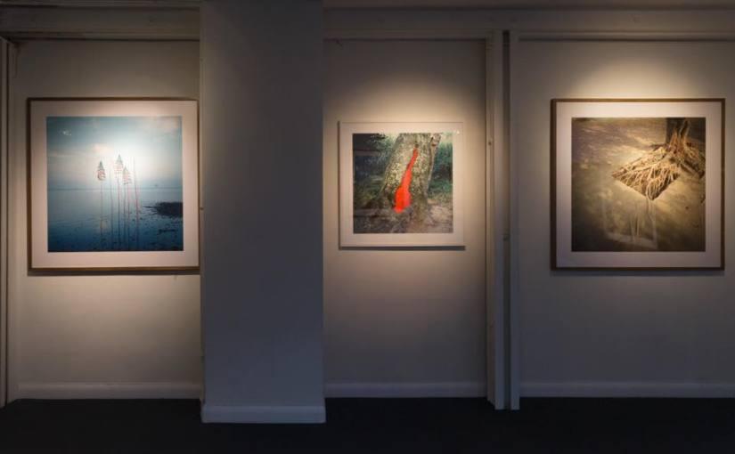 Nils Udo – artiste du Land Art – photographies et peintures Galerie P-A Challier