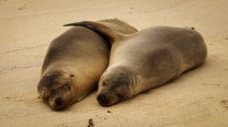2013.07.14 Galapagos Floreana