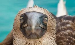 2013.07.16 Galapagos San Christobal