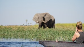 elephant at okavango delta safari