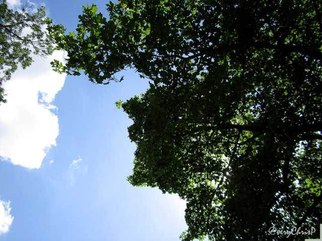 Sunny skies at Libbie Hill Park.