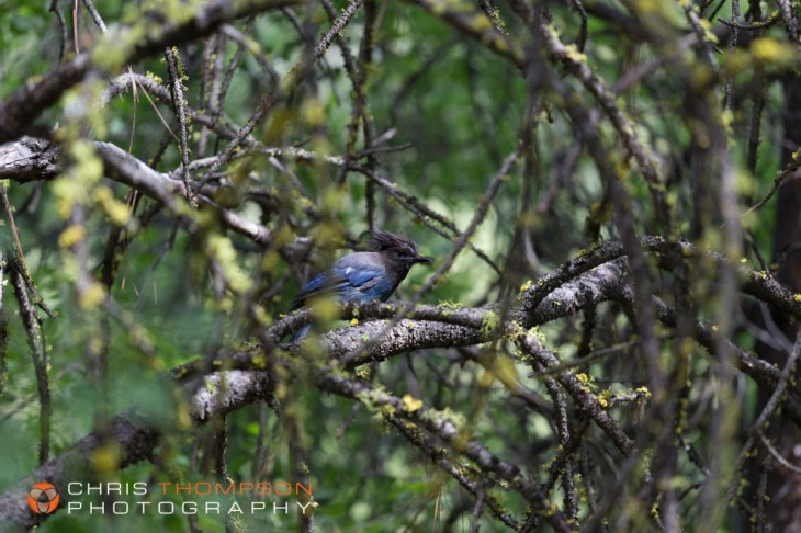 spokane-photographer-chris-thompson-photography-353