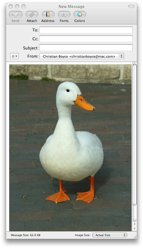 Mail message with duck image attachment