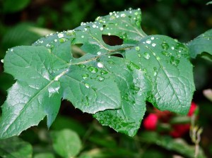 rain leaf dreamstimefree_135955