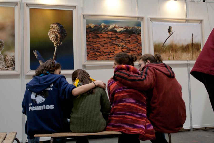 """Exposition """"La Chouette Chevêche"""" à Primevère"""