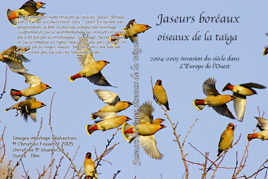 """DVD """"jaseurs boréaux oiseaux de la taïga"""""""