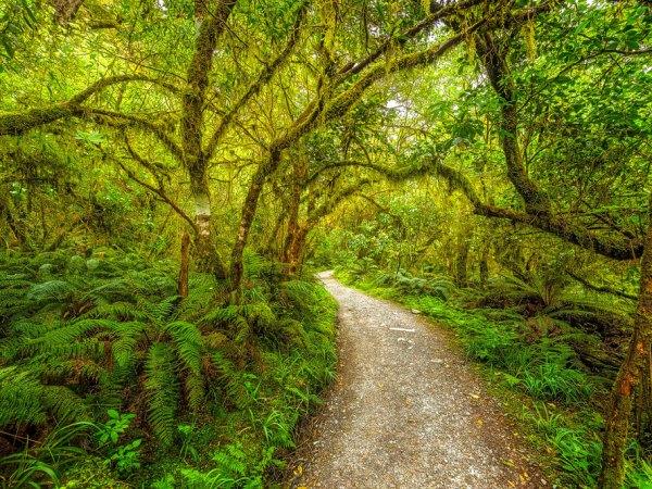 Regenwald in Neuseeland