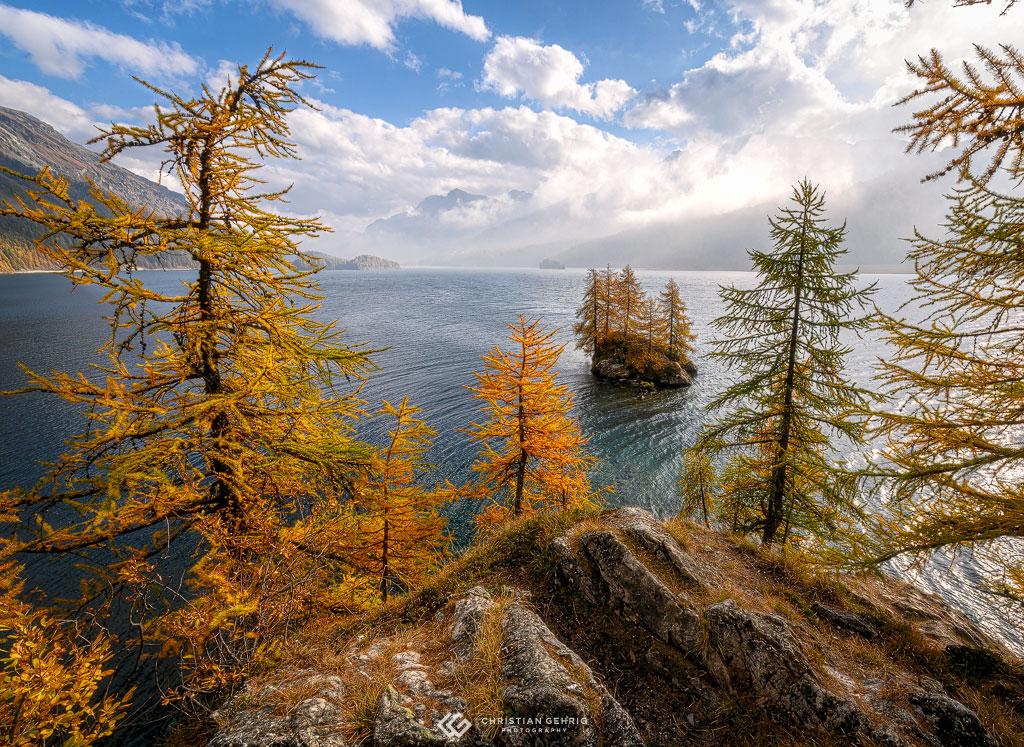 Goldene Lärchen mit Blick auf die Insel im Silsersee