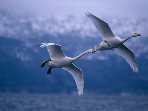 Feeling lonely? Feel the wind beneath your wings