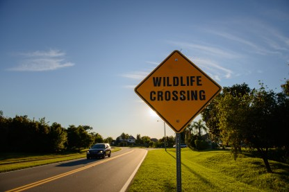 Wildlife Crossing, Melbourne, Florida, USA