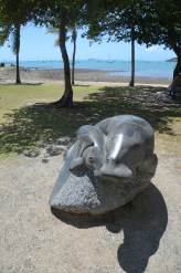 Dugong at Airlie Beach