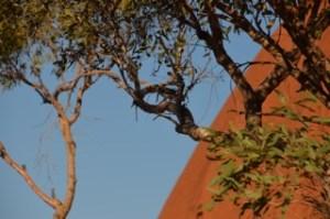 Tree of life hot desert in Australian outback