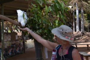Christie Adams feeding a large white bird