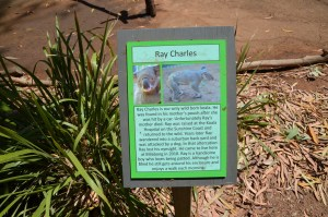 Sign about Ray Charles the Koala