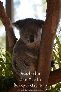 Australia itinerary - Koala in a tree