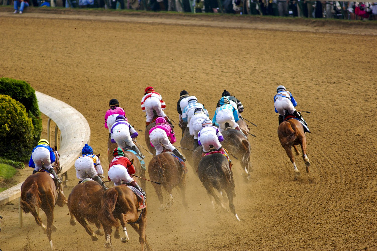 """The horses who compete in the Kentucky Derby are Thoroughbreds, a breed that's described as """"hot-blooded,"""" and known for their speed, agility, and bold personality."""