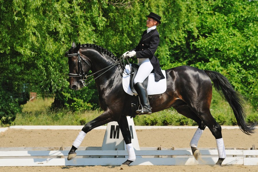 A standard dressage arena is marked with letters at regular intervals to indicate where particular movements should be performed.
