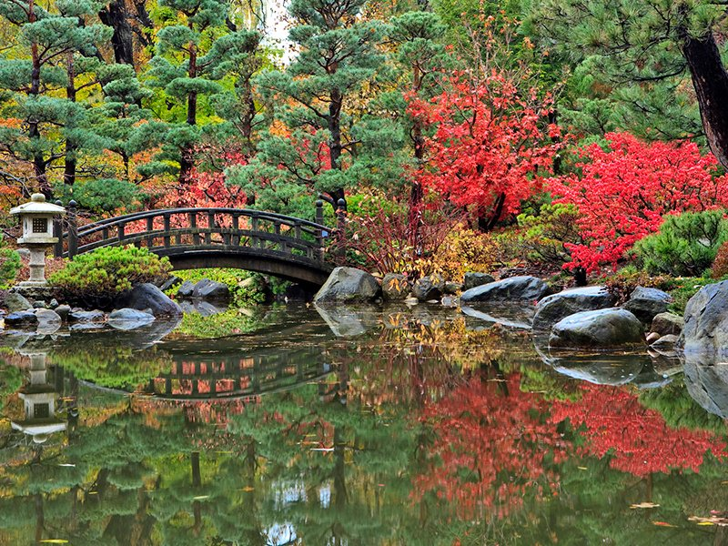 The Anderson Japanese Gardens in Rockford, Illinois blaze with scarlet foliage in the fall.