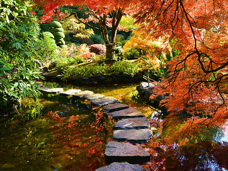 The Japanese Garden at Buchart Gardens in Victoria, Canada is entered through a torii gate and features flowing streams, Japanese maples, and Himalayan blue poppies in the spring.