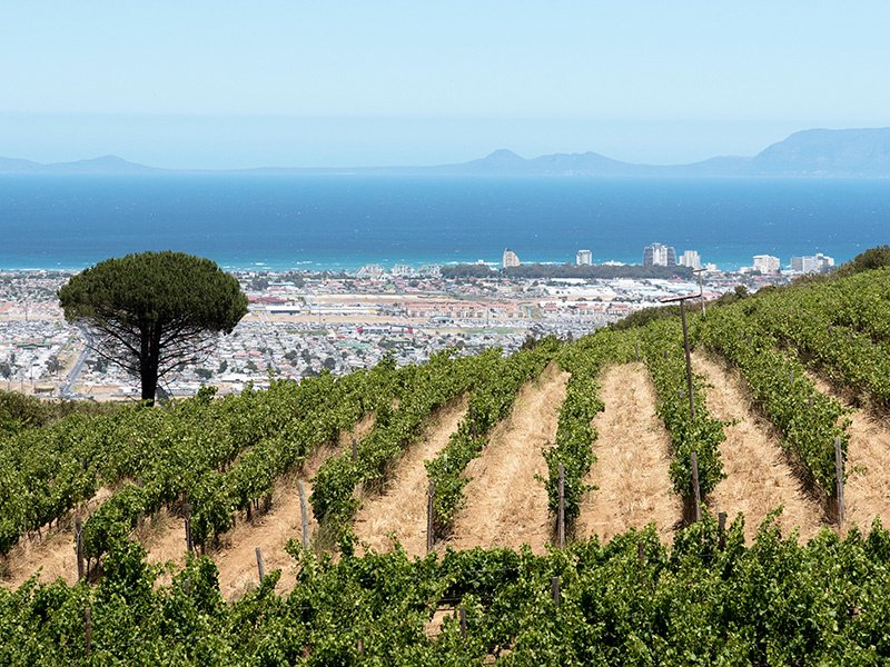 Large bodies of water slow temperature changes, providing nearby landmasses with steady climates, which make places like Cape Town, pictured, ideal for wine-making. Photograph: Alamy.