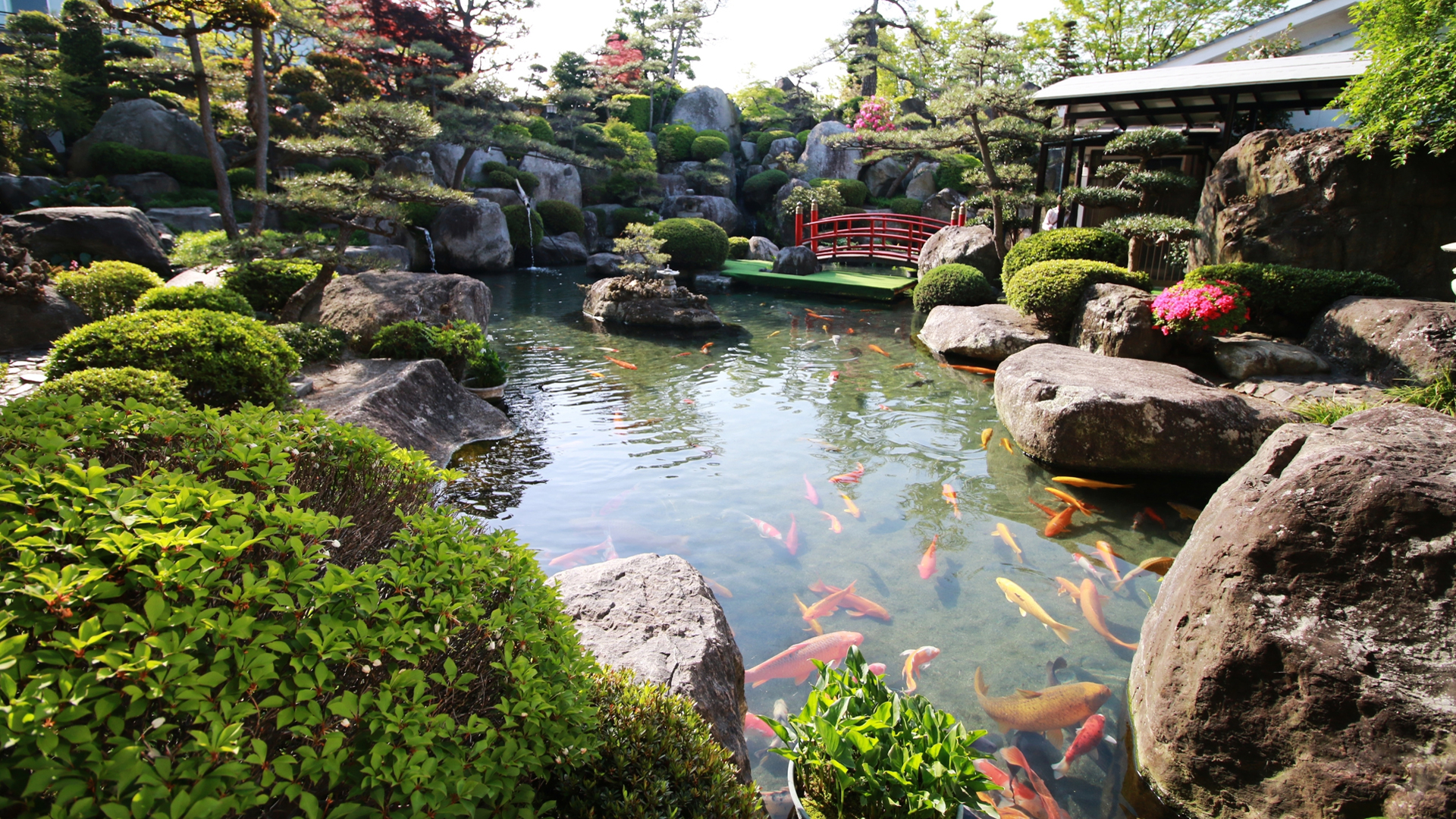 Living Jewels: 7 Homes With Koi Ponds
