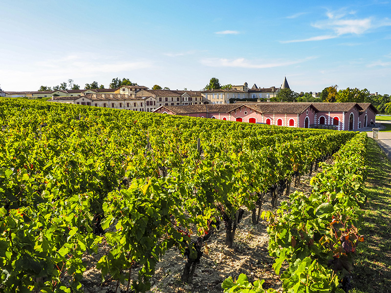 Vineyard-wines-wine-Alamy