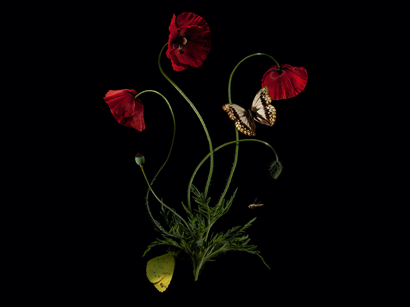 Mughal Botanical (#03) 2015 by Bas Meeuws