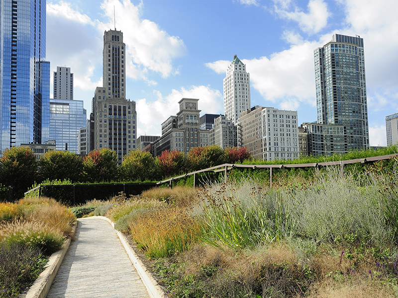 Chicago's Lurie Garden