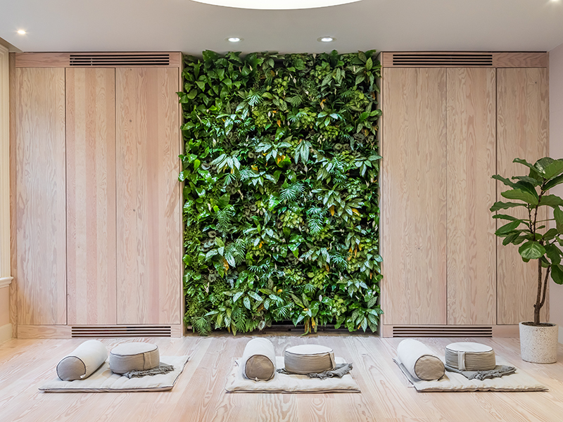 A living wall of plants in a meditation studio