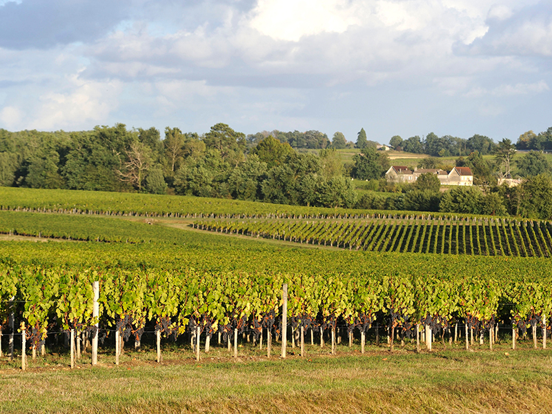 Lalande de Pomerol vineyards
