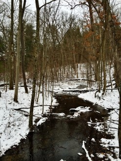 A small creek running through woods with snow-covered ground