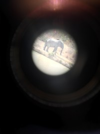 An elephant at the watering hole near Zaina Lodge