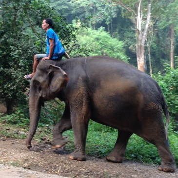 the importance of elephants in thailand christine bedenis