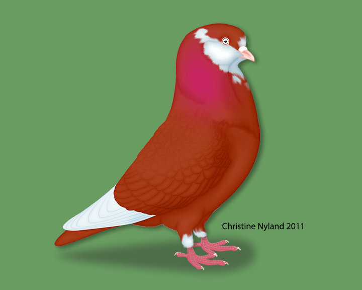 https://i1.wp.com/www.christinenyland.com/wp-content/uploads/2018/05/American-Roller-Red.png?w=2000&ssl=1