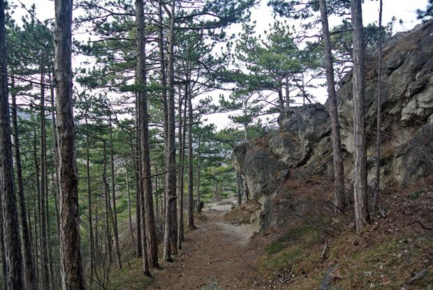 Weg zur Burg Rauheneck