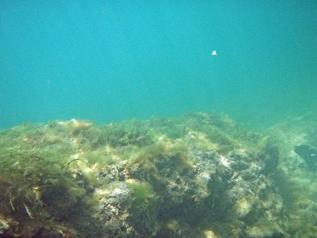 Flusstauchen in der Ybbs