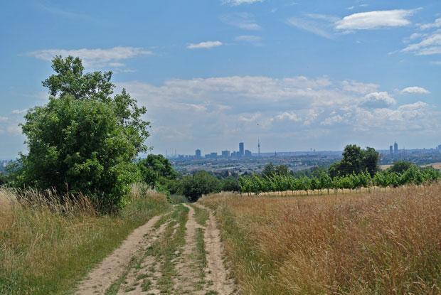 Blick vom Bisamberg auf Wien