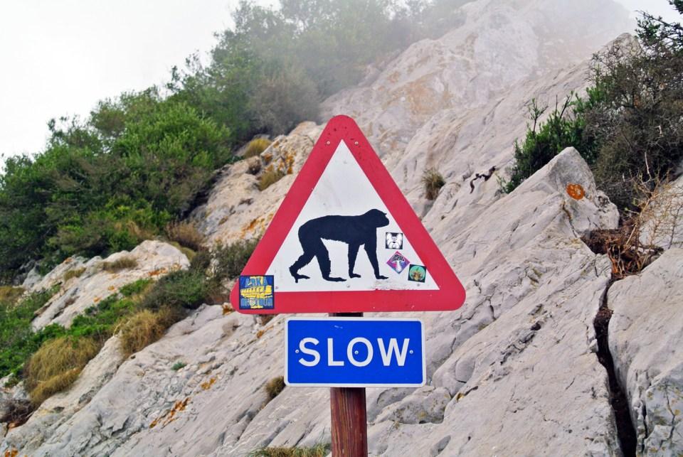 Affen-Verkehrsschild Gibraltar