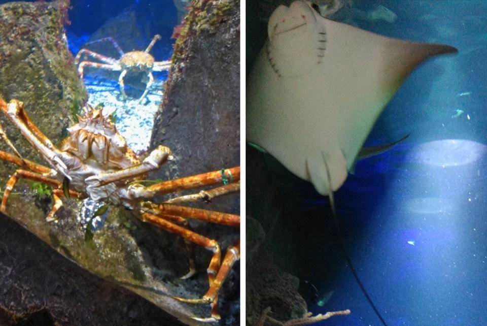 Seespinnen und Rochen im Haus des Meeres
