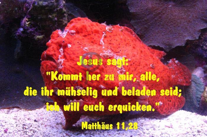 370 - Matthäus 11,28