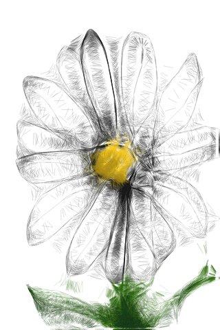 Daisy Memory