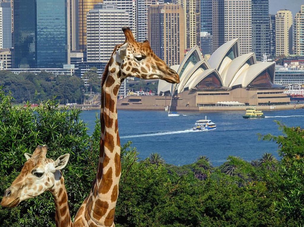 15 Things to do in Sydney, Australia - Christobel Travel