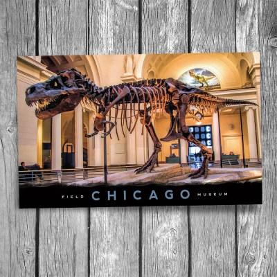 "Chicago ""Sue"" Tyrannosaurus Rex Postcard"