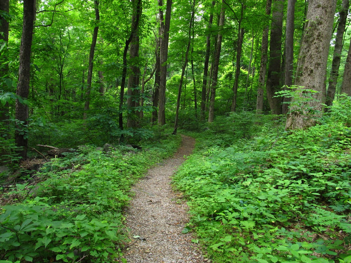 Best Nature Escapes In Tennessee