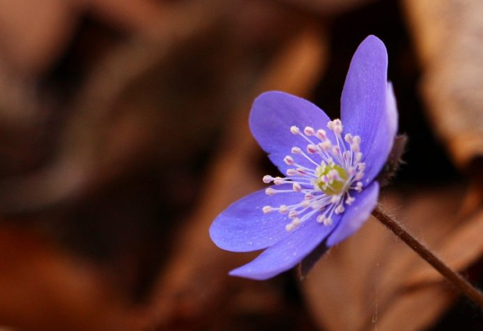 Spring Wildflower Pilgrimage in the Smoky Mountains