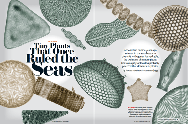 "Scientific American ""Tiny Plants That Once Ruled the Seas"""