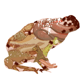 The Ecological Effects of Cane Toads © Nicole Stahl (Project Summary)
