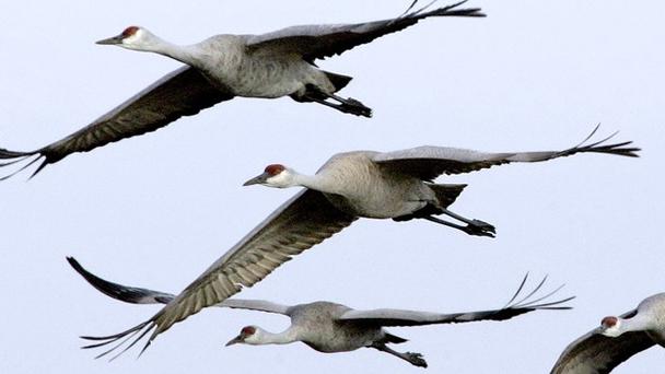 Les oiseaux voient le sud