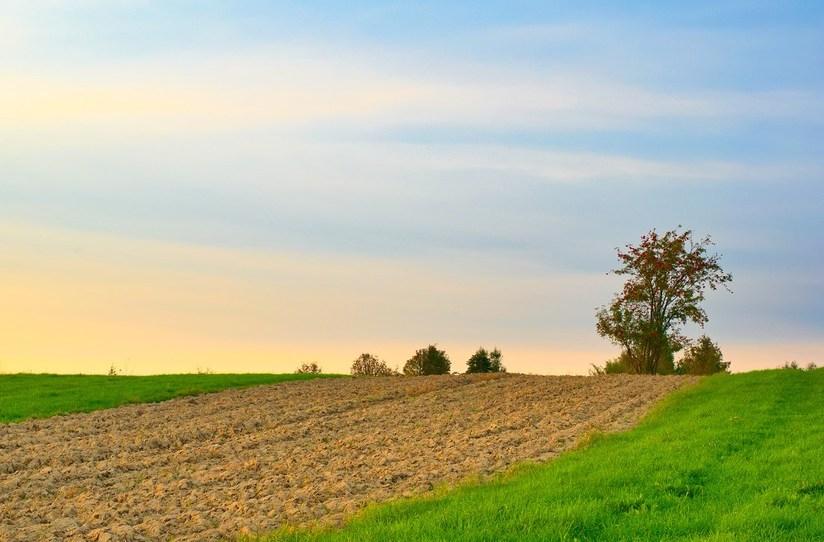 https://pixabay.com/de/photos/feld-bauernhof-plantage-weide-5577221/
