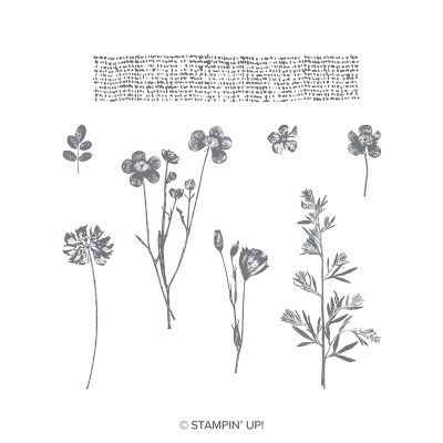 Pressed Flowers Clear-Mount Stamp Set 8 qty #146789 Price: $10.50  Pressed Flowers Wood-Mount Stamp Set 8 qty #146786 Price: $15.00